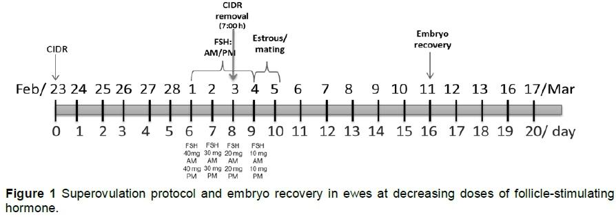 Ovulatory response and embryo quality in Katahdin ewes