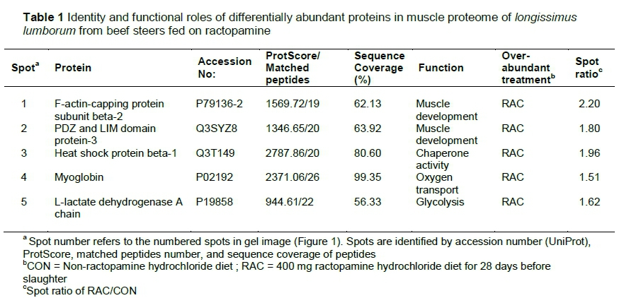 Ractopamine-induced changes in the proteome of post-mortem beef