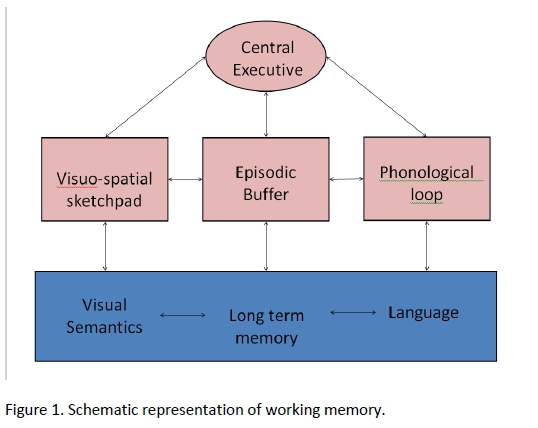 What Is Working Memory >> The Role Of Working Memory In Childhood Education Five