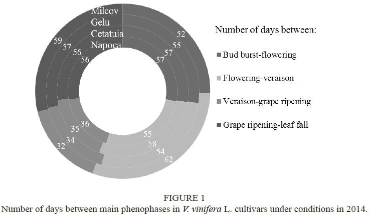 Quantitative investigation of leaf photosynthetic pigments