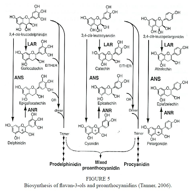 Effects of abiotic factors on phenolic compounds in the