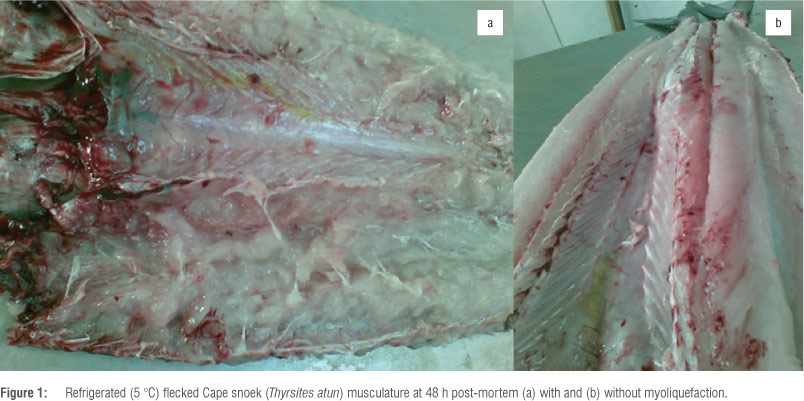 A review of Kudoa-induced myoliquefaction of marine fish species in South Africa and other countries