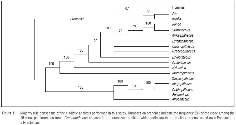 A cladistic analysis of Graecopithecus
