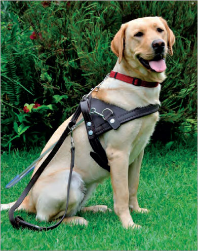 research paper on service dogs