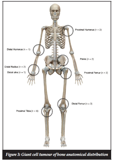 Fantastic Distal Definition Anatomy Ensign - Anatomy And Physiology ...