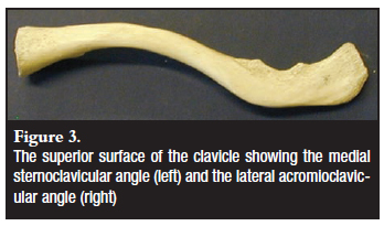 A morphometric study of the clavicle