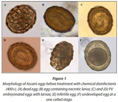 Aszcariasis helminth. Ascaris tabletta felnőtteknek és gyermekeknek