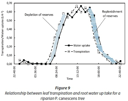 Characterising the water use and hydraulic properties of riparian